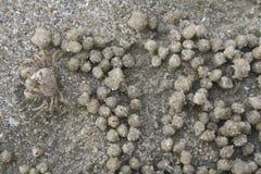 Sand background, sand beach. Little crab on the sand beach Stock Image