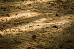 Sand Background / Sand / Sand Texture Background. Sand texture close-up to reveal tiny details Stock Photo