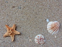 Sand background. With sea star and seashells Stock Photos