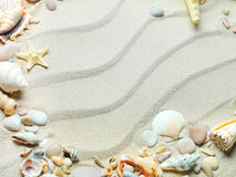 Sand background with shells and starfish. Beach sand with shells and starfish stock photography
