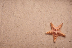 Sand Background with Starfish Stock Images