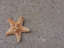 Sand background.Starfish Stock Photo