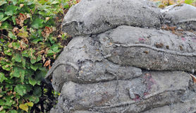 Sand bags turned to stone, world war I. Sand bags that survived the trenches in the  battlefields in World War One in the Westhoek, Diksmuide, Flanders, now Stock Photo