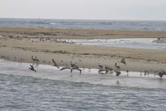 Sand Bar Wild Bird Habitat Stock Photo