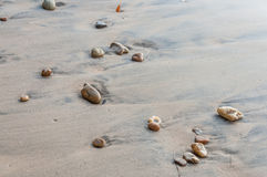 Sand beach background Royalty Free Stock Photos