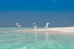 Beach Birds. Sand beach and blue sky with birds Royalty Free Stock Photo
