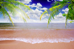 Sand beach with coconut leaves Royalty Free Stock Images