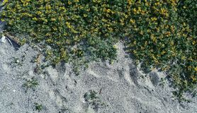 Sand beach and flowers stock photo