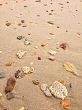 Sand on the beach full of seashells, stone, brain coral Stock Images