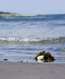 Sand beach.GN. Stonee and seaweed laying next to the ocean on a sand beach.GN stock images