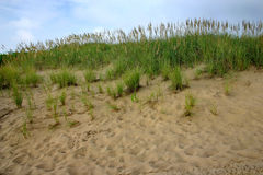 Sand and beach grass Royalty Free Stock Photo