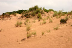 Sand and beach grass Royalty Free Stock Image
