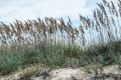 Sand and Beach Grass at Sandbridge Stock Photo