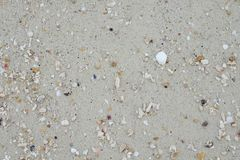 Sand beach and have shellfish carcass. this image for texture,ba. Sand beach and have many shellfish carcass. this image for texture,background and nature Stock Image