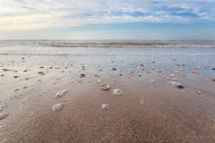 Sand beach at low tide on North sea Stock Photography