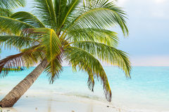 Sand beach and ocean wave, South Male Atoll. Maldives Stock Image