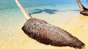 The sand beach with palm tree. Sea waves on the sand beach with palm tree inclined over sea stock video