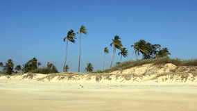 Sand beach with palm trees. At sunny day stock video