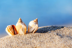 Sand beach sea shell Royalty Free Stock Photography