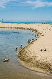 Sand beach with seagulls at Capitola, California Stock Photo
