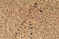 Sand beach structure closeup Royalty Free Stock Image