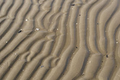 Sand on the beach. Water leaves drawings on sand Royalty Free Stock Photography