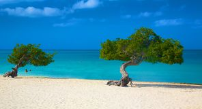 Hot Sand and Blue Skies in Aruba!. A perfect sunny day for a dip in the beautiful blue waters off Eagle Beach, Aruba Stock Photos