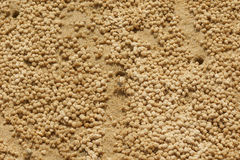Sand bubbler crab and the sand pellets Royalty Free Stock Photo