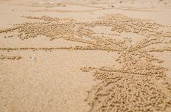 Sand Bubbler Crabs Scientific Subfamily: Ocypode ceratophthalmus. Leave mud balls around a hole on beach of pure white sand, Koh Yao Noi, Thailand Royalty Free Stock Images