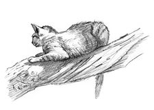 Sand Cat drawing sketch on a tree Royalty Free Stock Image