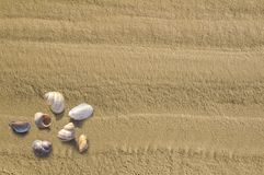 From sand with cockleshells Stock Images