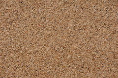 Sand Of Coral  Debris Royalty Free Stock Photos