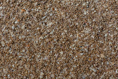 Sand Of Coral  Flinders Royalty Free Stock Photo