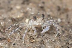 Sand Crab Stock Photos