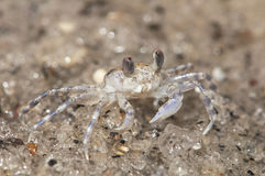 Sand Crab Stock Photos