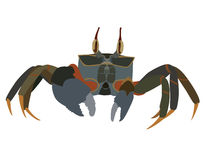 Sand crab vector. Cute cartoon sand crab vector royalty free illustration