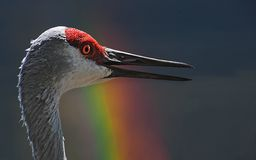 Sand Crane Stock Images