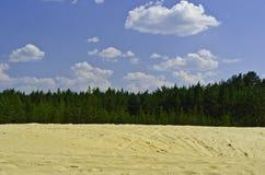 Sand-Dünen sind in einem Kiefernholz. Stockbilder