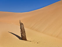 Sand dead trunk close Stock Images