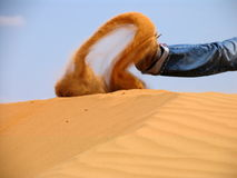 Sand in der Bewegung Stockbild