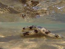 Sand, der Seestern siebt Lizenzfreies Stockfoto