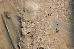 Sand des Mangrovenwaldes Lizenzfreies Stockbild