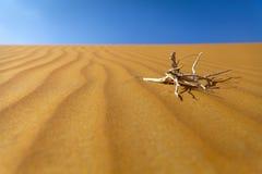Sand desert. Beautiful Empty Quarter desert, UAE Stock Images