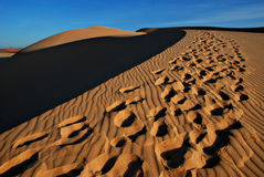 Sand desert. Dunes, wild landscape, footprints of people, yellow sand-dune and blue sky, barkhan royalty free stock image