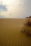 Sand desert. Dunes in Nida, Lithuania Royalty Free Stock Images