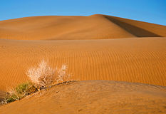 Sand desert with blue sky Royalty Free Stock Images