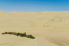 Sand desert dunes and green oasis Royalty Free Stock Photos