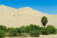 Sand desert dunes and green oasis Royalty Free Stock Image