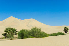 Sand desert dunes and green oasis Royalty Free Stock Photo