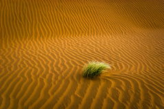 Sand desert with grass Royalty Free Stock Photography
